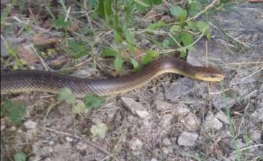 В Ужгороде наткнулись на змею размером с полноценного человека