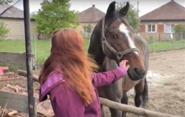 Жителька столиці Закарпаття врятувала від вірної смерті двох коней