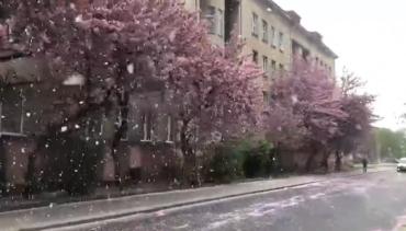 """Захватывающая красота: В Ужгороде падает уникальный """"снег"""""""