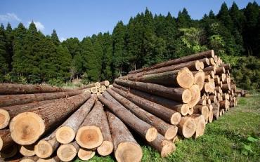 Закарпатье входит в ТОП-5 лидеров по количеству реализации лесной продукции