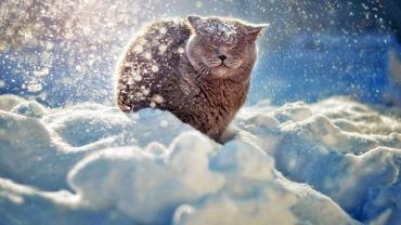 Морозы, снег и дожди: Какая погода ожидает Закарпатье перед выходными