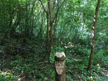 """Закарпаття. Рубки дерев у """"сфері догляду"""" проведуть майже на 170 гектарах лісів Хустщини"""
