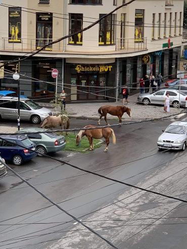 В Ужгороде на ул. Швабской заметили курьезную картину
