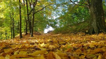 Фантастичні диво-світлини багряно-жовто-зелених Карпат