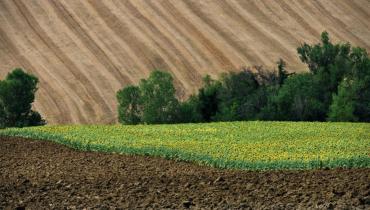 Земельна реформа. Як міркують про її перспективи жителі Закарпаття? (ВІДЕО)