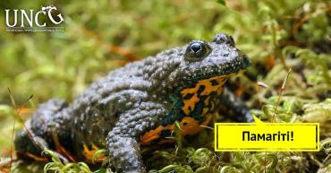 Поліція Закарпаття відкрила провадження за фактом незаконного вилову, заготівлі та продажу жаб