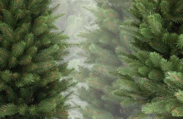 Вже відомо, де в Ужгороді продаватимуть новорічні ялинки та прикраси до них!