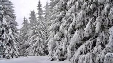 Прогноз погоди в Закарпатті на середу, 8 січня