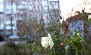 """""""Нестандартна"""" весна очікує цьогоріч на Україну — з температурними аномаліями"""