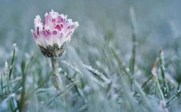 Жителей Закарпатья предупредили об усилении ночных морозов