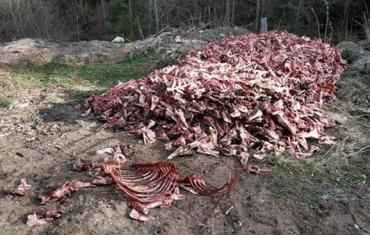 Велетенську купу невідомих кісток знайшли на перевалі у Карпатах