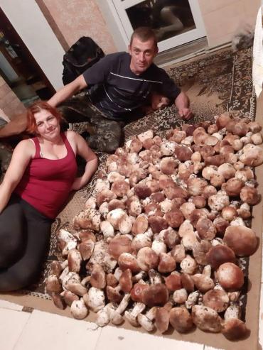 Врожаї білих грибів на Закарпатті шокують всю Україну