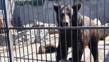 Два нові мешканці їдуть в Реабілітаційний центр для бурих ведмедів до Синевиру