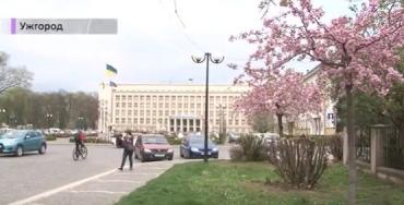 """В Ужгороді розпочався """"сакуровий сезон"""""""