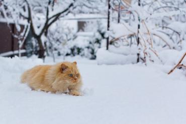 В Закарпатье зимняя погода придет раньше времени