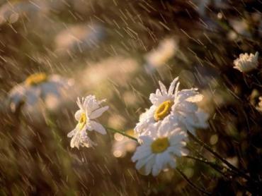 Синоптики рассказали, какой погода будет 8 мая