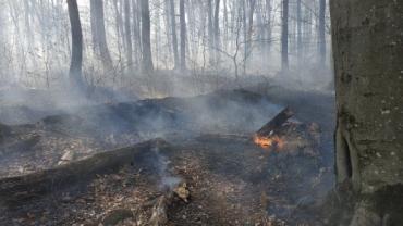 На Закарпатье бедолага сгорел заживо в лесу
