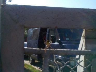 В Закарпатье из-за глобального потепления эмигрировал ядовитый паук