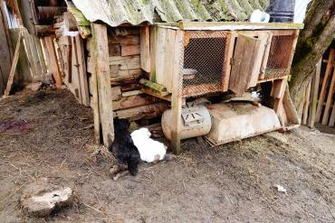 В Закарпатье неизвестное существо перегрызает горло и выпивает кровь животных