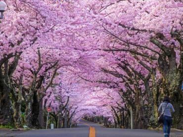 Закарпатье совсем скоро начнет напоминать Японию