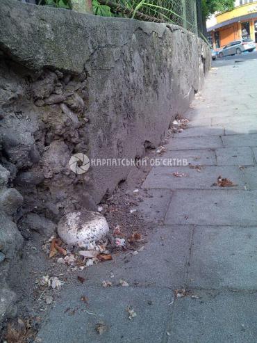 В Ужгороде нашли шампиньоны просто на улице