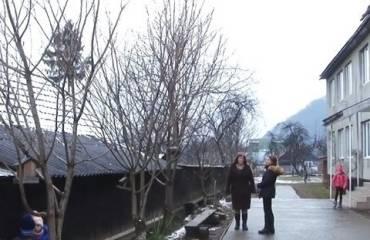 В Закарпатье вывели морозостойкий вид сакуры