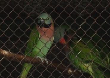В Закарпатье птицевод-любитель создал настоящее пернатое царство