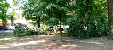 Как в Ужгороде оправдались за вырубку деревьев в парке для аттракционов
