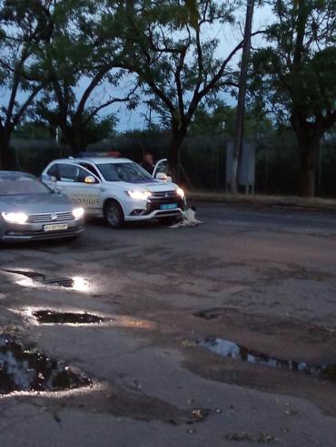 В Ужгороде патрульные на бешеной скорости сбили невинных существ: Один погиб, второй сбежал в шоковом состоянии