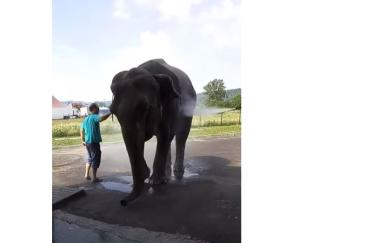 Как в Закарпатье слона на мойке для машин мыли