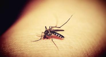 Африканская малярия атакует Украину