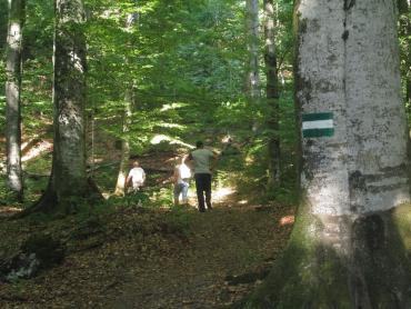 Москаль: Площа природно-заповідного фонду Закарпаття становить майже 14%