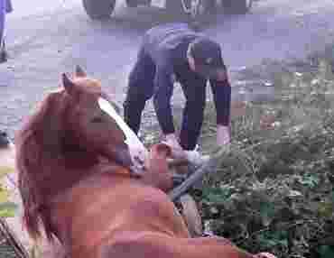 В Закарпатье лошадь оказалась узником 3-х метровой ямы