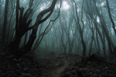 На Закарпатье в лесу внезапно умер грибник: Новые детали от спасателей