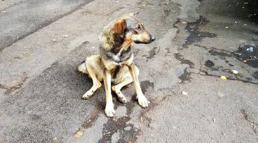 Ужгород: вино — людям-безхатченкам, шашлик — безпритульним собакам