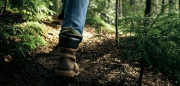 Зниклого безвісти жителя Закарпаття знайшли у лісі мертвим