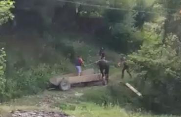 В Закарпатье будут судить изверга за жестокое обращение с конем