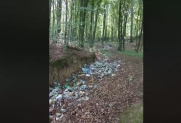 Ліси у Карпатах перетворюються на одне гігантське сміттєзвалище