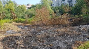 """Біля """"Кірпічки"""" в Ужгороді винищили нововисаджені дерева!"""