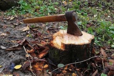 Закарпатская прокуратура согласовала подозрение двум мужчинам, которые незаконно вырубали большую кучу дуба