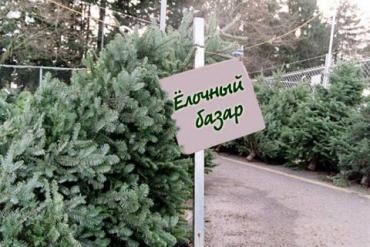 Елочные базары в Ужгороде: места продажи