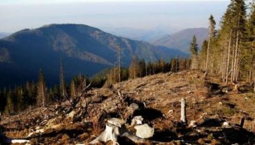 В Закарпатье лесхоз нанес вред окружающей среде больше чем на полмиллиона гривен