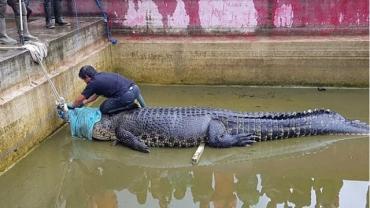 Домашний крокодил убил женщину в Индонезии