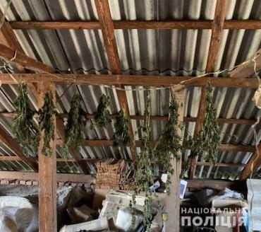 В Закарпатье во время обыска у наркодельца обнаружили богатый урожай