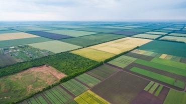 Махинации с землей в Закарпатье: Прокуратура Ужгорода вернула государству 172 гектара земли