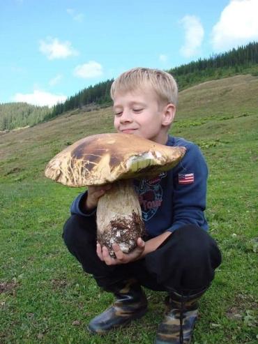 В Закарпатье в разгаре грибная пора: Грибники делятся в сети трофеями тихой охоты