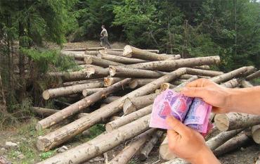 """Ущерб миллионы гривен: В Закарпатье чиновник лесхоза """"случайно"""" разрешил незаконную вырубку"""