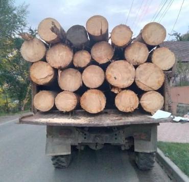 В Закарпатье полиция задержала 4 грузовика с подозрительной древесиной