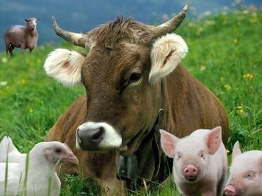 Індекс продукції тваринництва в Закарпатті за 2017р. склав 100,2%