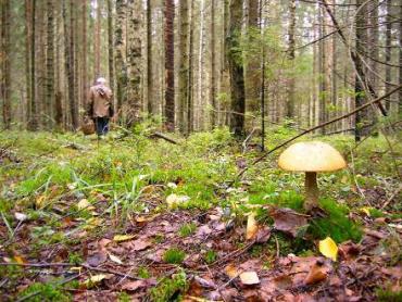 """У лісах Закарпаття все ще шукають зниклого любителя """"тихого полювання"""""""